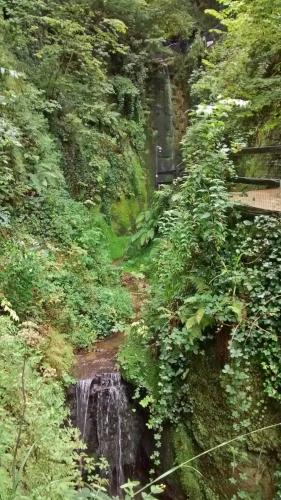 sattes grün mit kleinem Wasserfall